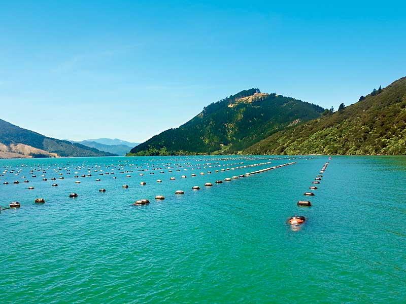 NZ's 3b aquaculture plan