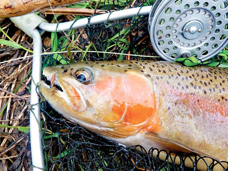 NZ trout fishing season