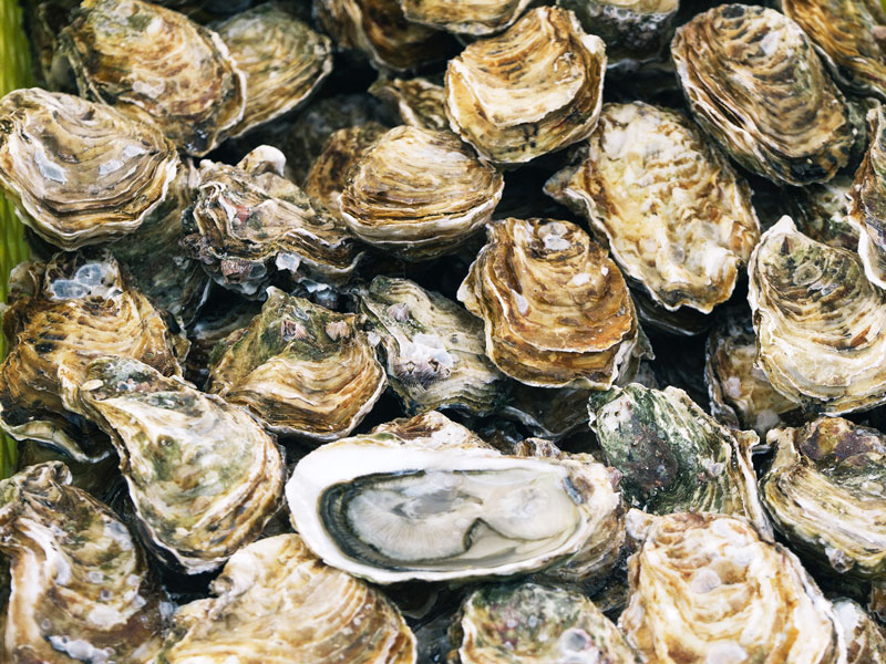 COVID-19: oyster harvest suspended in NZ
