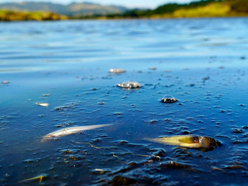NZ water quality