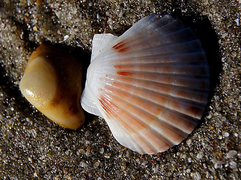East-Coromandel-scallop-fishery-closure-1